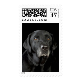 Perro de perrito negro del labrador retriever del sellos postales