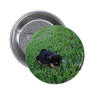 Perro de perrito pins