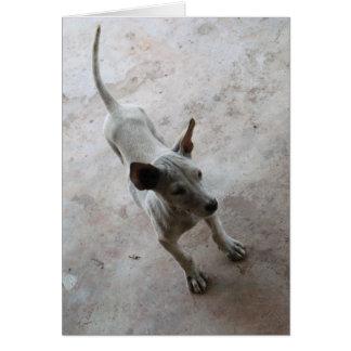 Perro de perrito tailandés de Luk Maa… Soi Tarjeta De Felicitación