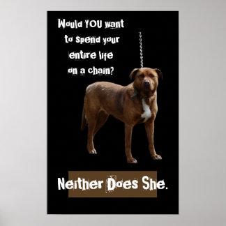 Perro de Pitbull en una cadena Póster