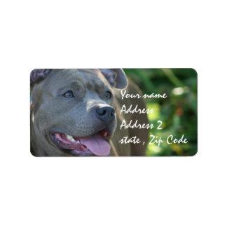 Perro de Pitbull Etiquetas De Dirección
