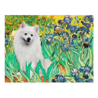 Perro de Pomerania esquimal 1 - iris Tarjetas Postales