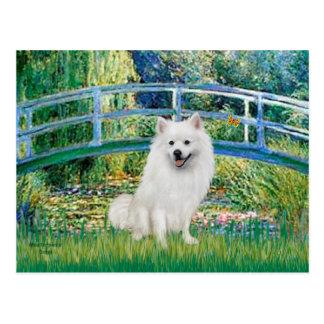 Perro de Pomerania esquimal 1 - puente Postales