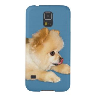 Perro de Pomeranian que pega la lengua hacia fuera Carcasas Para Galaxy S5