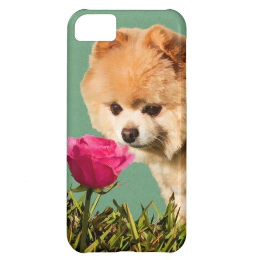 Perro de Pomeranian y personalizable color de rosa