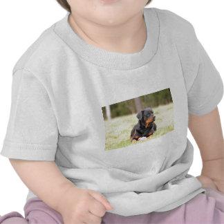 Perro de Rottweiler Camiseta