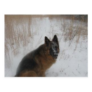 Perro de Shephed del alemán en nevada Tarjeta Postal