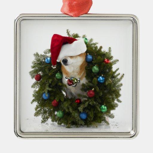 Perro de Shiba Inu que lleva el gorra de Santa que Adornos