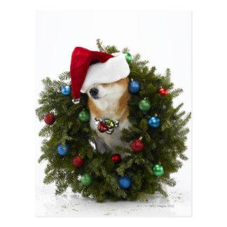 Perro de Shiba Inu que lleva el gorra de Santa que Postales