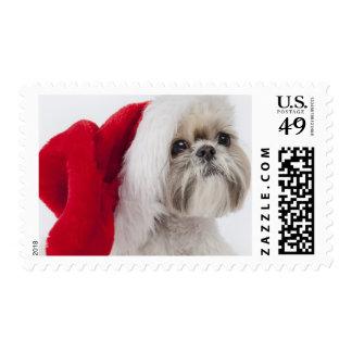 Perro de Shih Tzu que lleva un gorra de Papá Noel Estampillas