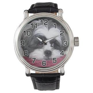 Perro de Shih Tzu Relojes