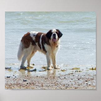 Perro de St Bernard en el poster de la playa, impr