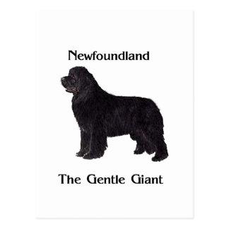 Perro de Terranova el gigante apacible Postal
