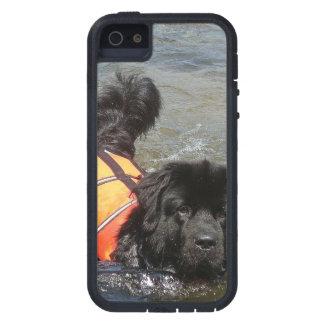 Perro de Terranova iPhone 5 Coberturas