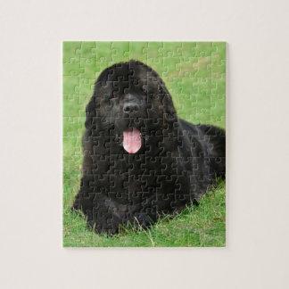 Perro de Terranova Rompecabeza Con Fotos