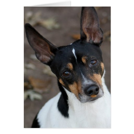 Perro de Terrier de rata Tarjeta Pequeña