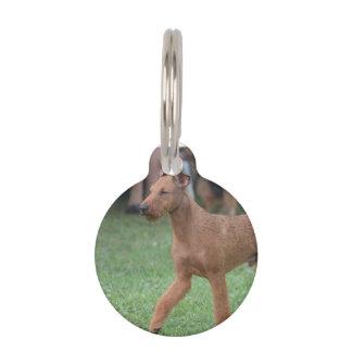 Perro de Terrier irlandés Placas De Mascota