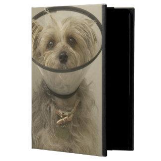Perro de Terrier que lleva el cuello protector