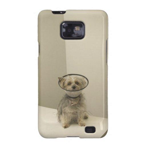 Perro de Terrier que lleva el cuello protector Galaxy S2 Fundas