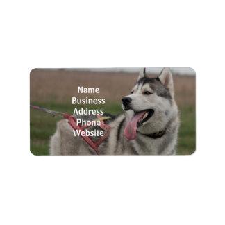 Perro de trineo del husky siberiano etiqueta de dirección