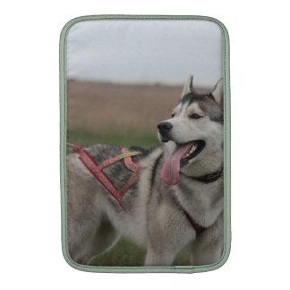 Perro de trineo del husky siberiano funda para macbook air