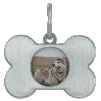 Perro de trineo del husky siberiano placa mascota