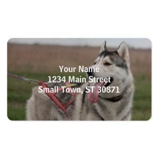 Perro de trineo del husky siberiano tarjetas de visita