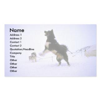 Perro de trineo emocionado tarjeta de visita