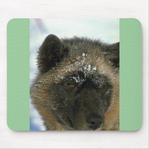 Perro de trineo esquimal tapetes de ratón