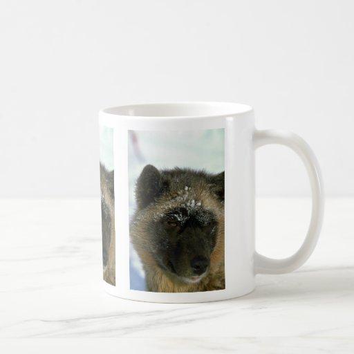 Perro de trineo esquimal taza