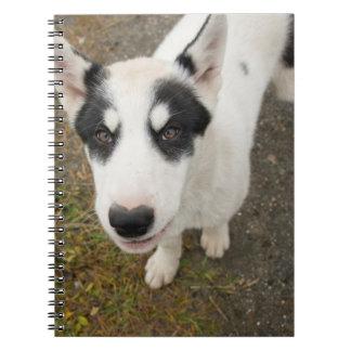 Perro de trineo groenlandés famoso, perrito blanco libros de apuntes con espiral