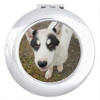 Perro de trineo groenlandés famoso, perrito blanco espejos maquillaje