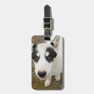 Perro de trineo groenlandés famoso, perrito blanco etiqueta de equipaje