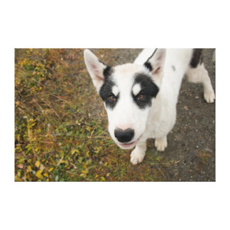 Perro de trineo groenlandés famoso, perrito blanco impresión en lienzo estirada