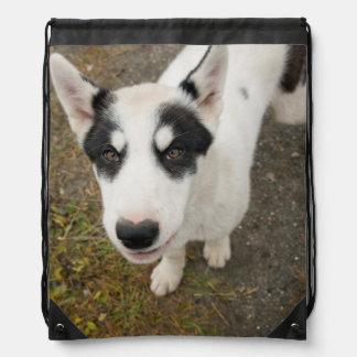 Perro de trineo groenlandés famoso, perrito blanco mochilas
