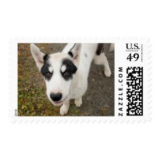Perro de trineo groenlandés famoso, perrito blanco timbre postal