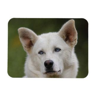perro de trineo imán de vinilo