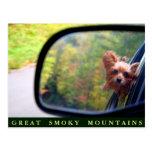 Perro de Yorkie - paseo del otoño - Great Smoky Mo Tarjeta Postal