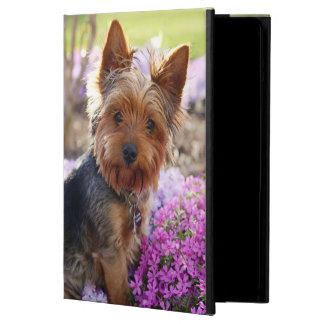 Perro de Yorkshire Terrier, caja linda del aire de