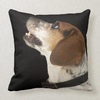 Perro del beagle con perfil negro del cuello cojines