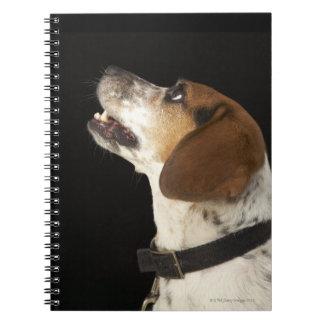 Perro del beagle con perfil negro del cuello libreta espiral