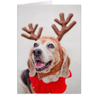 Perro del beagle del navidad con los oídos tarjeta de felicitación