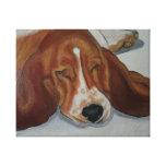 Perro del beagle lienzo envuelto para galerías