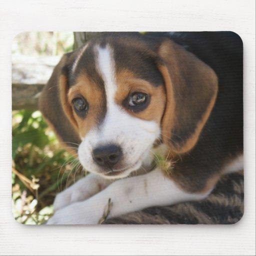 Perro del bebé del beagle alfombrillas de raton