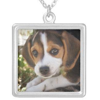 Perro del bebé del beagle joyeria