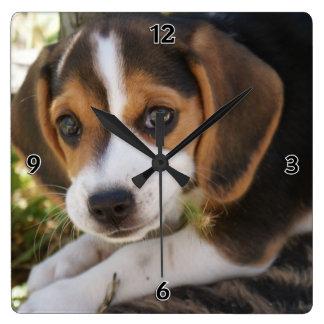 Perro del bebé del beagle reloj cuadrado