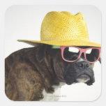Perro del boxeador con el gorra y los vidrios calcomanía cuadradase