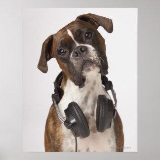 perro del boxeador con los auriculares póster