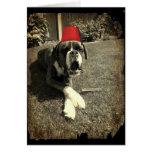 Perro del boxeador del tonelero de Tommy Tarjetón