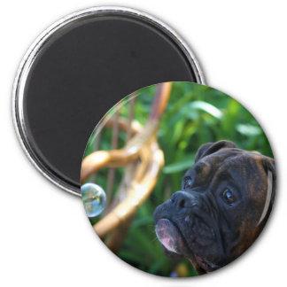Perro del boxeador e imán de las burbujas